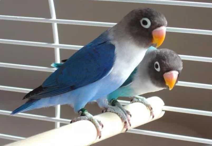 Gambar Labet Pastel Biru