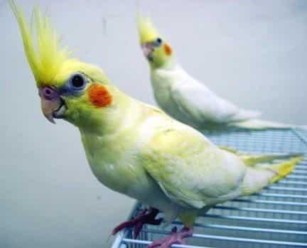 Gambar Burung Falk