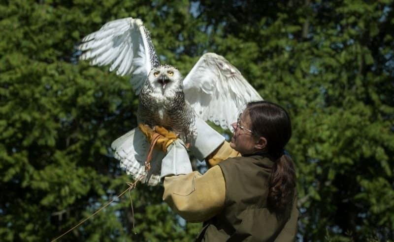 Cara Merawat Burung Hantu