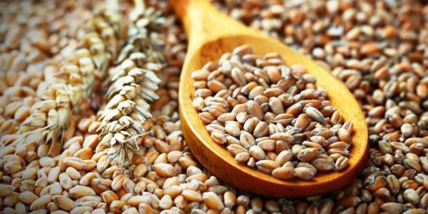 Biji Niger Seed dan Fumayin