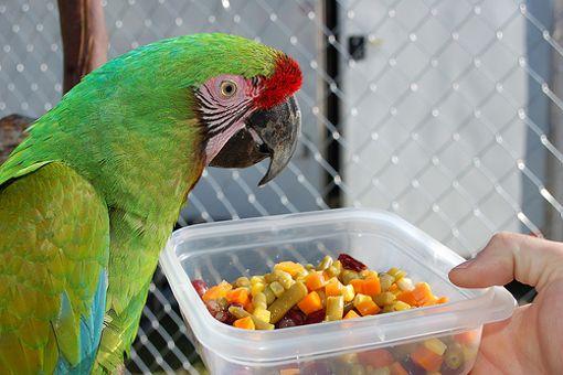Gambar Sayuran dan Buah Segar Untuk Burung
