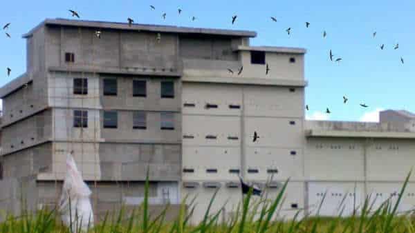 Foto Rumah Burung Walet