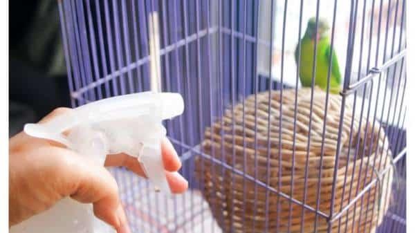 Membersihkan Kandang Burung