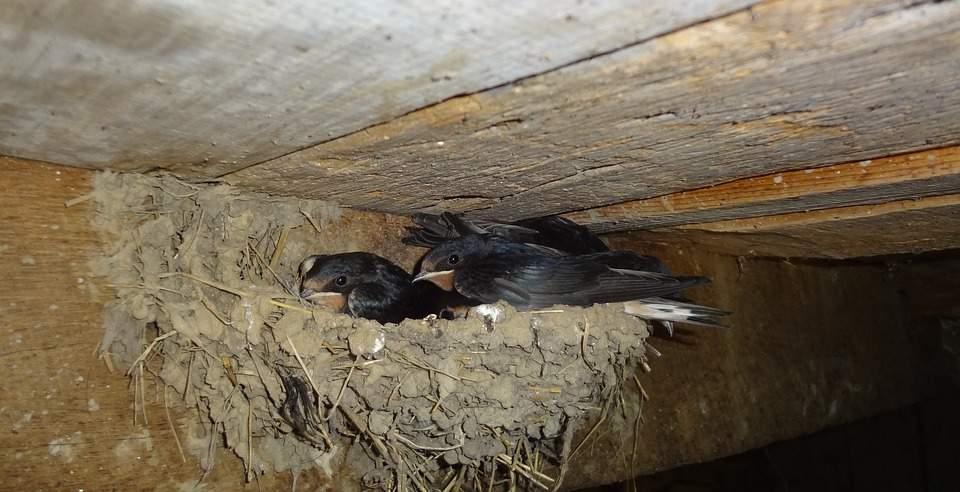 Membuat Sarang Untuk Burung Walet