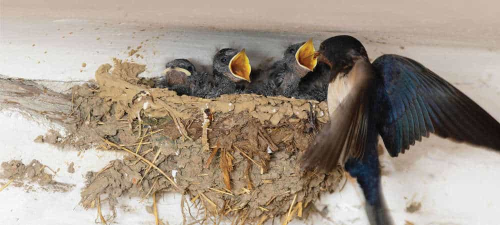 Foto Sarang Burung Walet